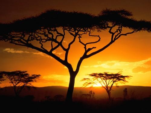 afrika x jpg Географическое положение большая часть Африки расположена в Северном и Восточном полушарии меньшая в Южном и западном