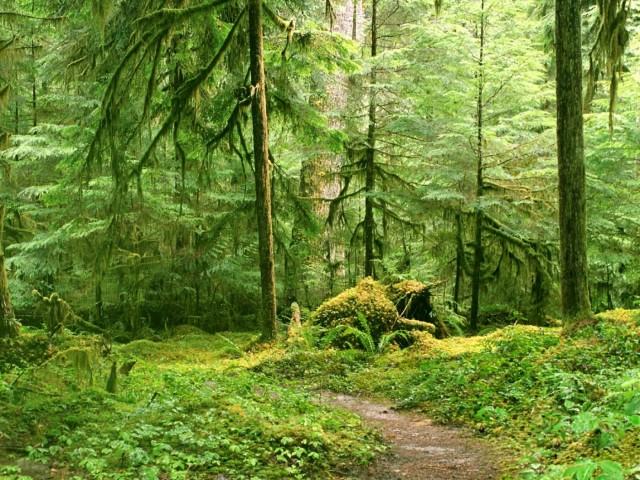 Роща — участок леса обычно