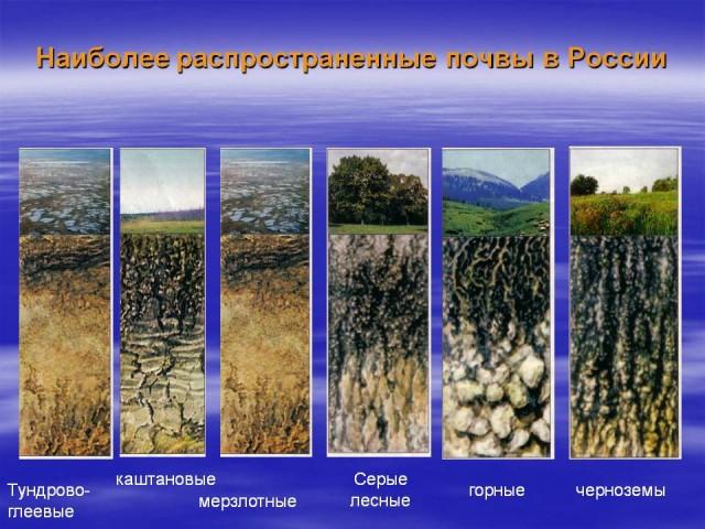 Почвы России основные типы почв России Наиболее распространенные почвы России