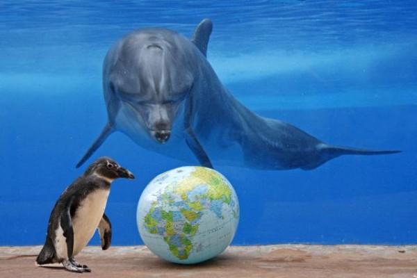 океаны Мировые океаны