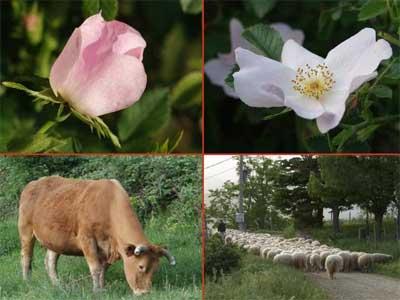 Доклад о растительном и животном мире 8741