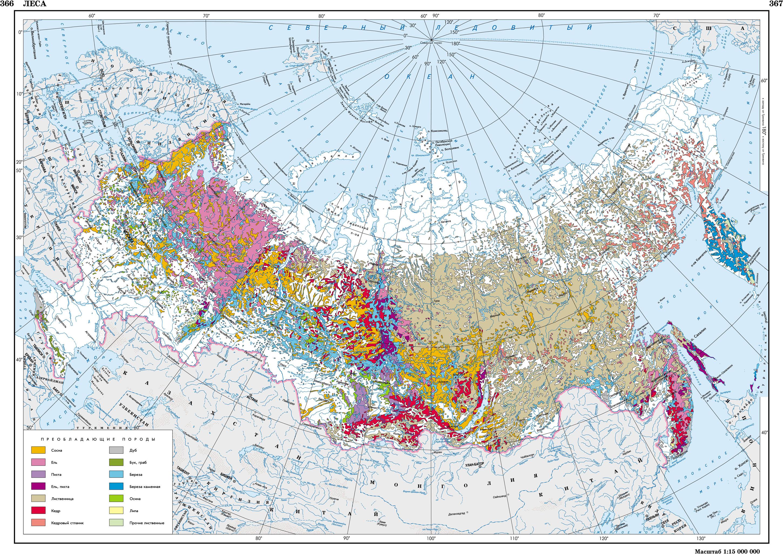 регионов россии занимают леса помогу взять кредит пермь