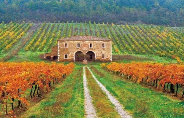 Buy land in Trento for agriculture