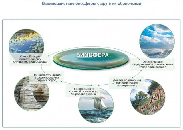 Значение биосферы Взаимодействие биосферы с другими оболочками