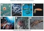 Организмы: планктонные, нектонные, бентосные