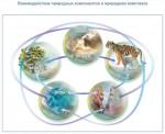 Взаимодействие природных компонентов в природном комплексе