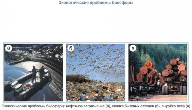 Доклад экологические проблемы биосферы 6955