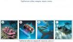 Трубчатые губки, медуза, акула, скаты
