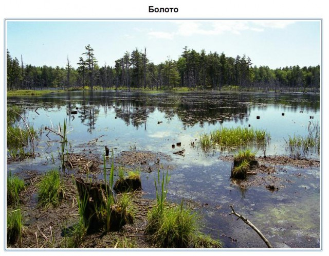 Озёра и болота класс Болото