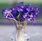 Какой цветок является символом весны в Германии?