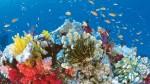 Что такое Большой Барьерный риф?