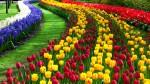 Когда отмечают праздник тюльпанов?