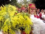 Где проходит праздник мимозы?