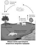 Общая схема круговорота веществ и энергии в природе