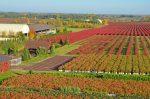 Сельское хозяйство Зарубежной Европы